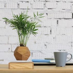 Летающие растение (Хамедорея) в горшке цена от 6 000 руб