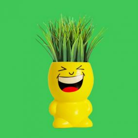 "Фитоник ""Potted plants Smile Laughing"" от 870 руб"