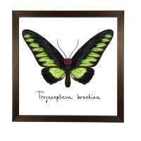 Постер в рамке «Бабочка акварель», 33x33 см цена от 950 руб