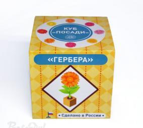 """Куб """"Посади"""" Гербера от 490 руб"""